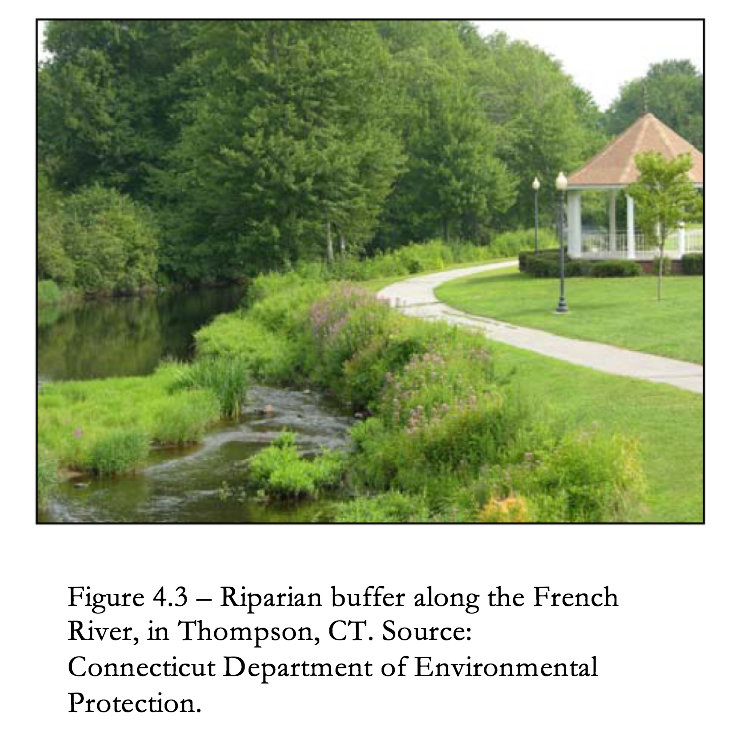 Figure 4.3 Riparian buffer along the French River in Thompson, CT