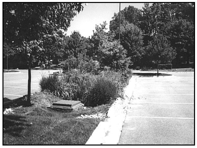 Image of stormwater bioretention practice